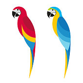 Flet parrot macaw on white background