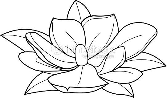Magnolia Flower Black And White Coloring Book Page Stock Vector