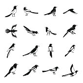 Magpie crow bird icons set. Simple illustration of 16 magpie crow bird vector icons for web