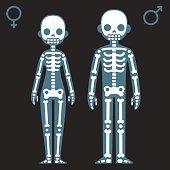 Stylized cartoon male and female skeletons with corresponding gender symbols.
