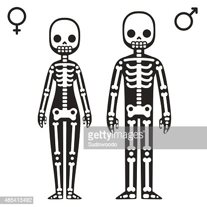male and female skeletons vector art | thinkstock, Skeleton