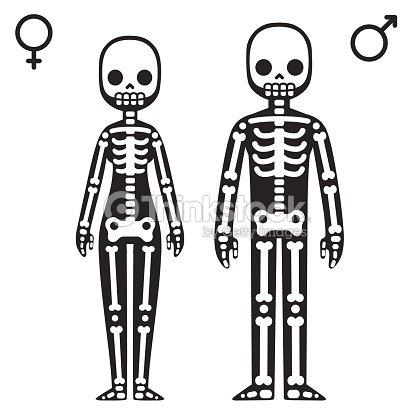 male and female skeletons vector art | thinkstock, Skeleton