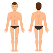 Male body in underwear front and back view. Athletic young man physique, vector clip art for medical infographics and fashion illustration.