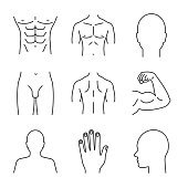Male body parts linear vector icons. Thin line. Head, hand, bicep, torso, back, buttocks, profile, groin