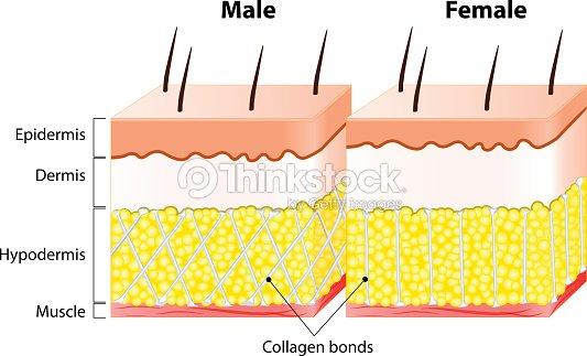 Männliche Ende Weibliche Haut Struktur Und Andere Vektorgrafik ...
