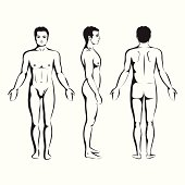 man body anatomy, front, back and side standing vector human pose
