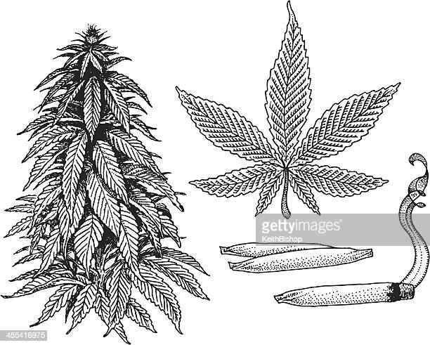 Illustrations et dessins anim s de marijuana herbe de cannabis getty images - Feuille cannabis dessin ...
