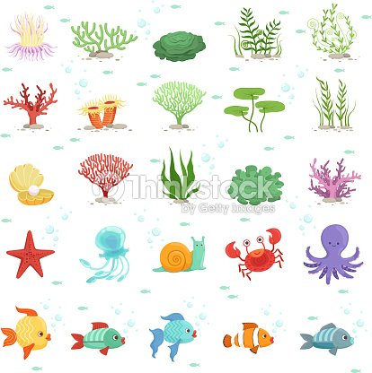 Marine animals, fishes collection and underwater plants. Aqua wild fauna. Vector illustration