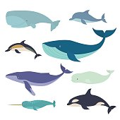 Vector illustration of whales and dolphins, such as narwhal, blue whale, dolphin, beluga whale, humpback whale and the sperm whale