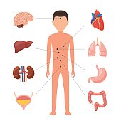 Human body anatomy. Medical diagram organs system. Vector illustration icons in flat style, isolated on white background