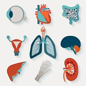 Medical icons of internal human organs realised in modern flat design with long shadow.