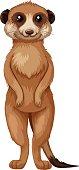 Meerkat with brown fur standing illustration