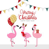 Merry Christmas and happy new year greeting card with cute flamingos and balloons. Animal wildlife holidays cartoon character vector.