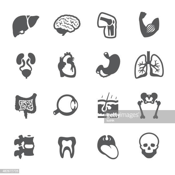 Mobico icons - The Human Body