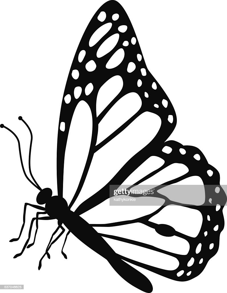 monarch butterfly side view in black and white vector art getty