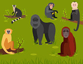 Monkey character animal different breads wild zoo ape chimpanzee vector illustration. Macaque nature primate cartoon wild zoo cheerful gorilla ape chimpanzee wildlife jungle animal.