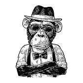 Monkey hipster with paws crossed in hat, shirt, sunglasses and bow tie. Vintage black engraving illustration for poster. Isolated on white background