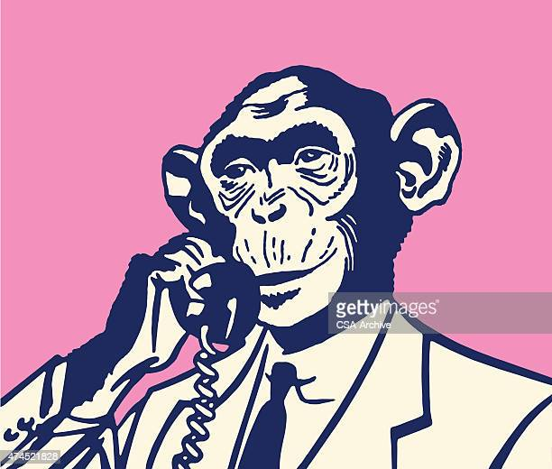 Monkey on The Telephone