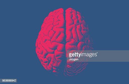 흑백 그림 뇌 빈티지 스타일 : 벡터 아트