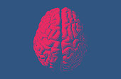 Red engraving brain illustration in top view isolated on blue background