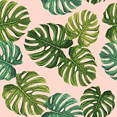 Tropical pattern with green Monstera leaves on pink background. Seamless pattern vector design.