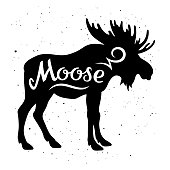Moose silhouette with a calligraphic inscription 'Moose' on a grunge background. Vector illustration
