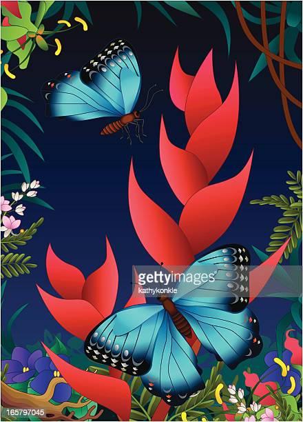 Morpho Schmetterlinge und heliconia in den Dschungel
