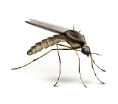 Vector Mosquito close up side view isolated on white background