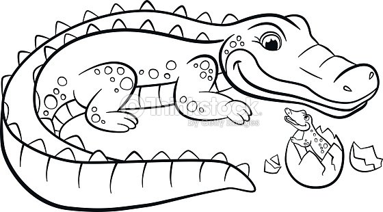 Mother Alligator Looks At Her Little Cute Baby Alligator Vector Art