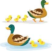 Vector illustration of Mallard duck and baby ducklings.