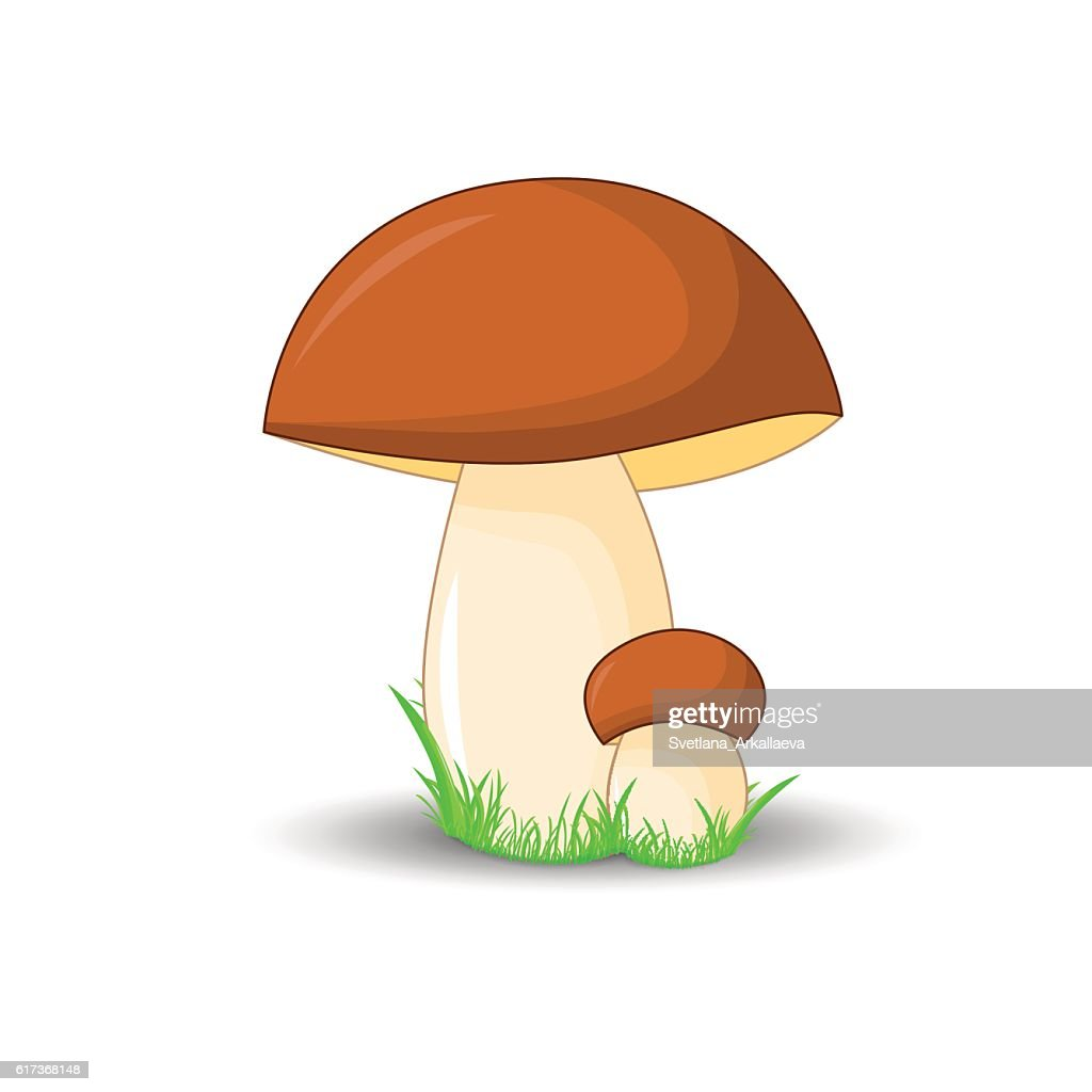mushroom porcini surround isolated on white background with grass