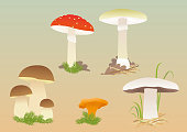 Set of various common forest mushrooms.
