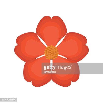 nasturtium flower spring image : stock vector