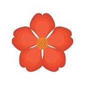 nasturtium flower spring image vector illustration eps 10