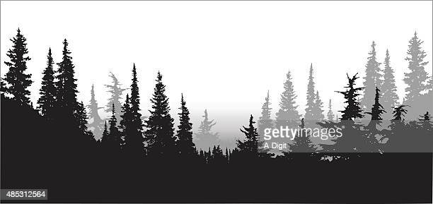 National Forest Pines
