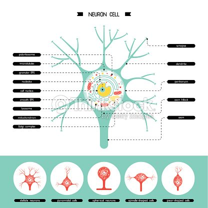 Neurone cell structure arte vetorial thinkstock neurone cell structure arte vetorial ccuart Image collections