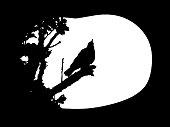 White songthrush vector shape on a plain black background.