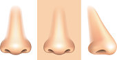 Nose isolated on white photo-realistic vector illustration