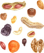 hand drawn nuts and dried fruits watercolor set