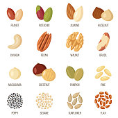 Vector set of named nuts and seeds. Flat style.