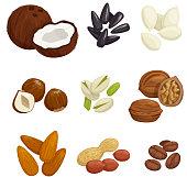 Nuts, grain and kernels. Vector icons of coconut, almond, pistachio, sunflower seeds, pumpkin seeds, peanut, hazelnut walnut coffee beans