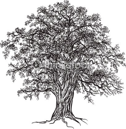 Chêne Tree Clipart vectoriel | Thinkstock