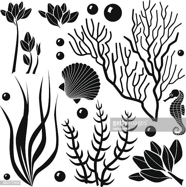 ocean plants