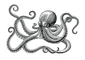 Octopus hand drawing vintage engraving illustration on white backgroud