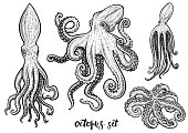 Octopus hand drawn vector illustrations. Black engraving line art set isolated on white.