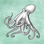 Octopus ink sketch on old paper background. Hand drawn vector illustration. Retro style.
