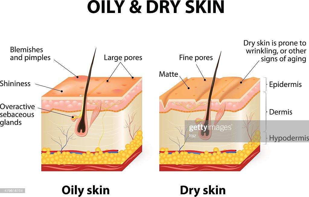 Skin Pore Diagram - Circuit Connection Diagram •