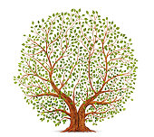 Old tree vector illustration