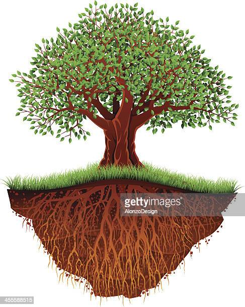 Old Tree with Floating Ground
