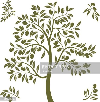 Olive tree : Vector Art